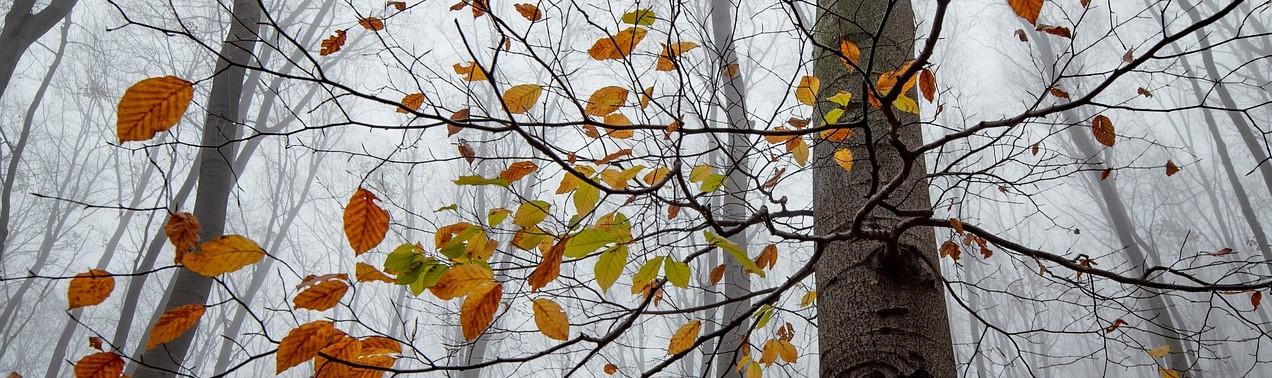 Lokakuun tilinpäätös – ei kuukautta ilman negaria