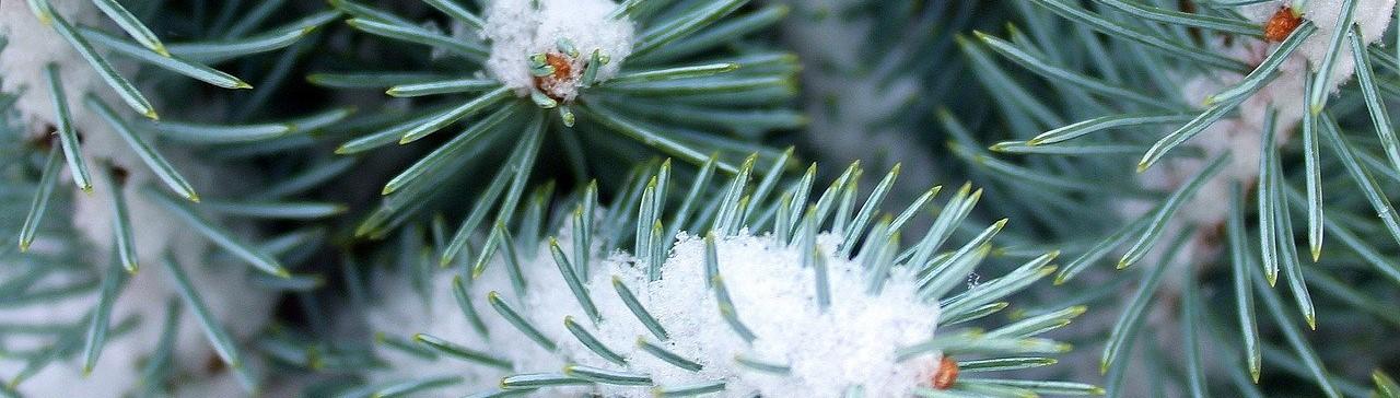 Joulukuun tilinpäätös – joulurallin taikaa