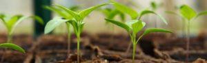 Sijoita kasvuyhtiöihin ja kasva niiden mukana