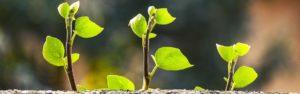 Talouskasvu – kasvuportfolion turma?